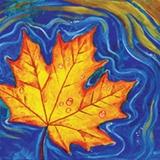 Fall Maple Leaf Floating