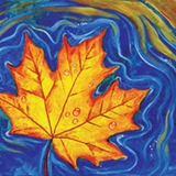 Fall Maple Leaf Floating